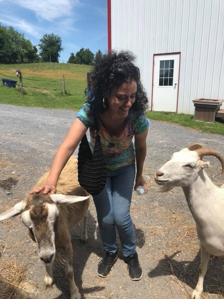 Phoebe with goats
